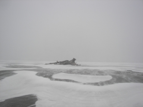 A log on the beach in the blowing snow.