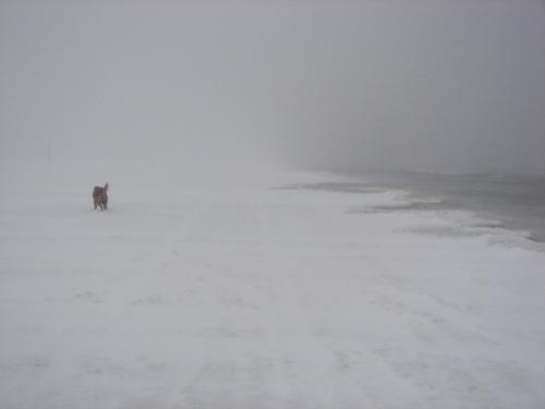 Molly running on the beach.